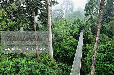 Canopy Walkway Sepilok Rainforest Discovery Center Sabah Borneo Malaysia Southeast Asia Asia - Stock Photo & Canopy Walkway Sepilok Rainforest Discovery Center Sabah Borneo ...