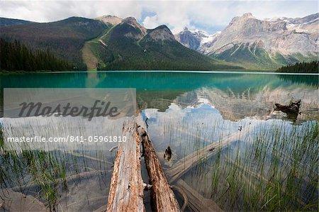 Fallen tree trunks, Emerald Lake, Yoho National Park, UNESCO World Heritage Site, British Columbia, Rocky Mountains, Canada, North America