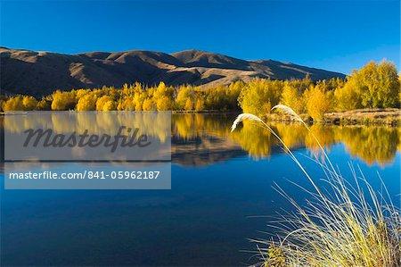 Intense golden foliage along a lakeside near Twizel, South Canterbury, South Island, New Zealand, Pacific