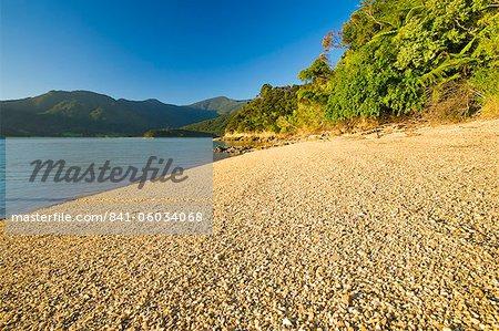 Kenepuru Sound, South Island, New Zealand, Pacific