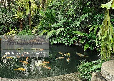 Koi fish pond, Manila, Philippines, Southeast Asia, Asia