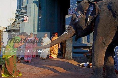 Elephant benediction, Kamakshi Amman, Kanchipuram, Tamil Nadu, India, Asia