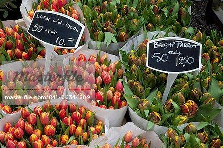 Tulips, Bloemenmarkt, Amsterdam, Holland, Europe
