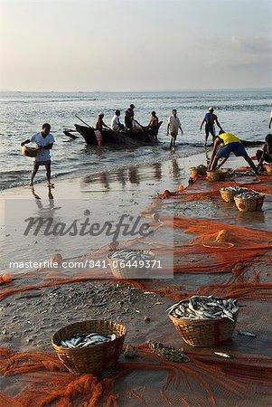 Local fishermen landing catch, Benaulim, Goa, India, Asia
