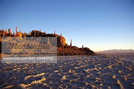 Cacti at sunset on Isla de los Pescadores and salt flats, Salar de Uyuni, Southwest Highlands, Bolivia, South America