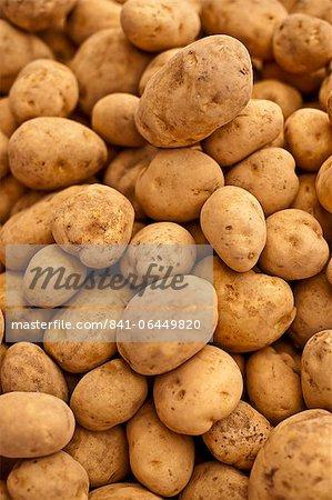 Potatoes, one of the local fresh vegetables at the Sunday morning market, Pollenca, Tramuntana, Mallorca, Balearic Islands, Spain, Europe