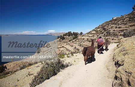 Woman walking llamas along path, Isla del Sol (Island of the Sun), Lake Titicaca, Bolivia, South America