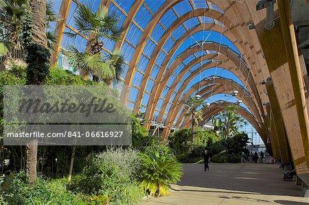 Winter Gardens, Sheffield, South Yorkshire, Yorkshire, England, United Kingdom, Europe