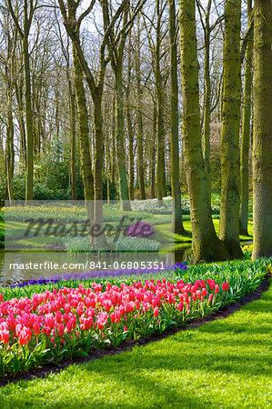 Flowers at Keukenhof Gardens, Lisse, Netherlands, Europe