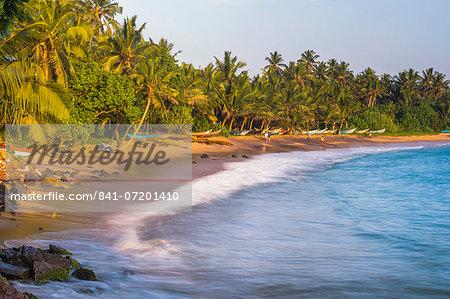 Palm trees on Mirissa Beach, South Coast, Southern Province, Sri Lanka, Asia