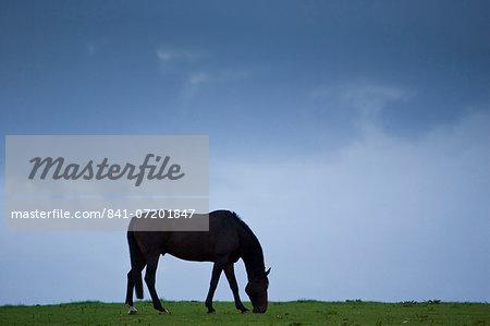 Horse grazing, Cirencester, Gloucestershire, United Kingdom