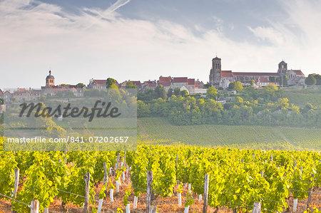 Vineyards below the hilltop village of Vezelay in Burgundy, France, Europe