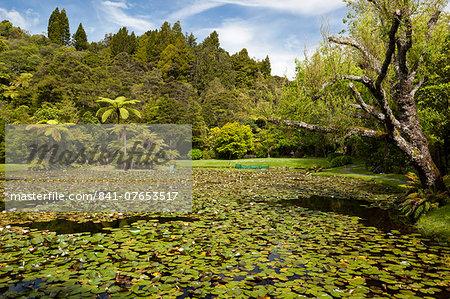 Lily pond at Rapaura Water Gardens, near Thames, Coromandel Peninsula, Waikato, North Island, New Zealand, Pacific