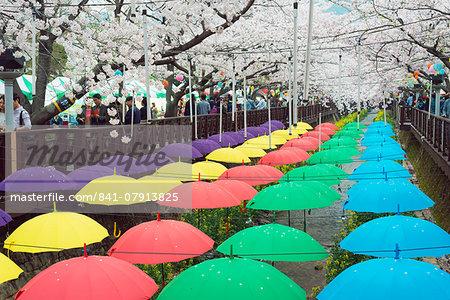 Spring cherry blossom festival, Jinhei, South Korea, Asia