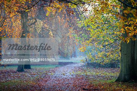 Autumn in Kew Gardens, UNESCO World Heritage Site, Kew, Greater London, England, United Kingdom, Europe