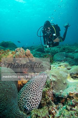 Spotted eel, Dimaniyat Islands, Gulf of Oman, Oman, Middle East