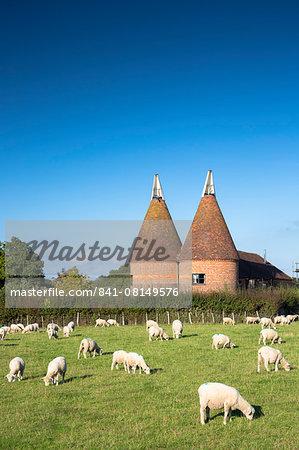 Traditional old Kentish oast house, hop kiln, for kilning (drying) hops for beer at Sissinghurst in Kent, England, United Kingdom, Europe