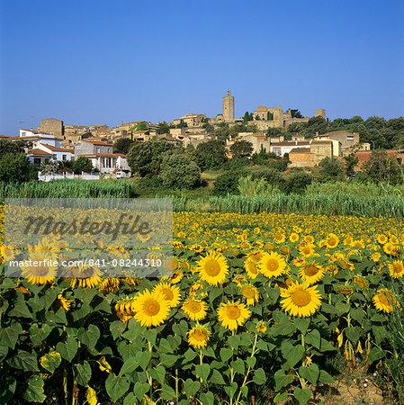 Hilltop village above sunflower field, Pals, Catalunya (Costa Brava), Spain, Europe