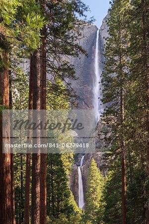 Yosemite Falls through the conifer woodlands of Yosemite Valley, UNESCO World Heritage Site, California, United States of America, North America