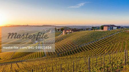 Vineyards at Barbaresco, Piedmont, Italy, Europe