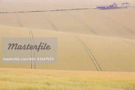 Rolling countryside of barley fields and farm and barn at Burdale near Fridaythorpe, Yorkshire Wolds, East Yorkshire, Yorkshire, England, United Kingdom, Europe