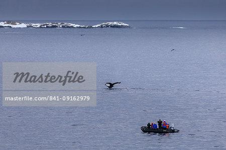 Humpback Whale (Megaptera novaeangliae) fluke, watched by tourists in zodiac, Torgersen Island, Antarctic Peninsula, Antarctica, Polar Regions