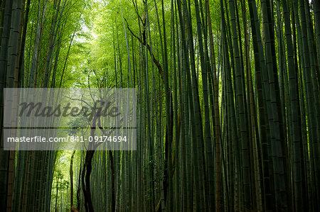 The Arashiyama Bamboo Alley, Kyoto, Japan, Asia