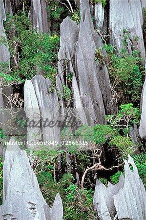 Malaysia, Sarawak, Mulu National Park, The Pinnacles