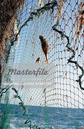 Hauling in the nets aboard a trawler,Brixham,South Devon,England