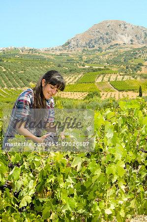 Young woman grape harvesting, Crete, Greece