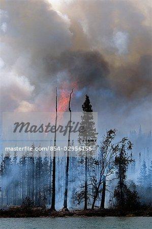 Blazing forest fire in Kenai Wildlife Refuge, Skilak Lake, Alaska, Summer.