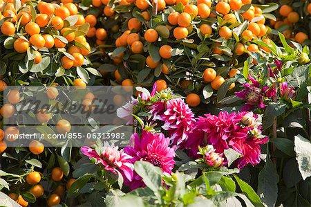 Citrus fruit and peony, flower market, Hong Kong