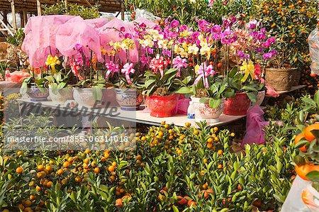 Citrus fruit and orchid, flower market, Hong Kong