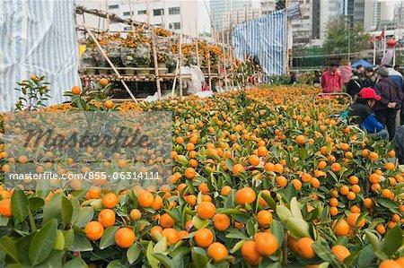 Chinese new year flower market, Tsuen Wan, Hong Kong