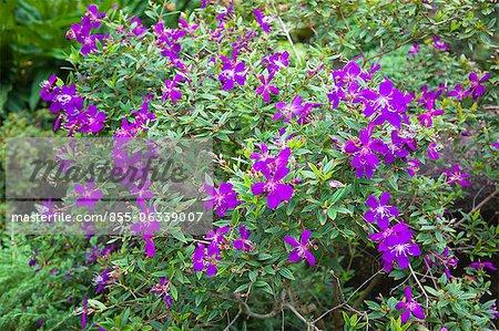 Flowers, Kowloon Park, Hong Kong
