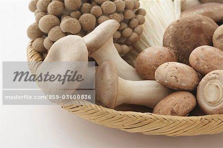 A lots Of Mushrooms In Basket