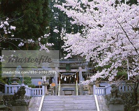 Sakurayamahachimangu, Gifu, Japan