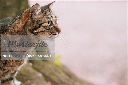 Cat and Cherry tree
