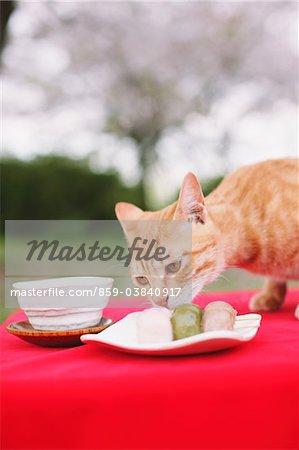 Cat smelling Japanese dessert
