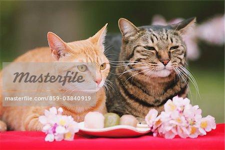 Cats enjoying Hanami
