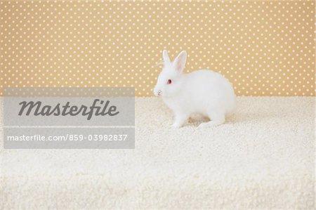 White Rabbit On Floor Mat