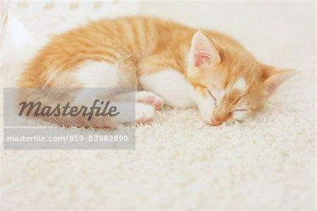 Baby Kitten Sleeping On Floor Mat