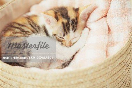 Baby Kitten Sleeping Out Of Basket
