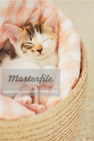 Baby Kitten Sleeping In Basket