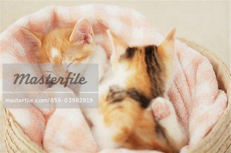 Baby Kittens Sleeping In Basket