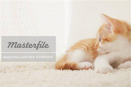 Baby Kitten Sitting, Close Up