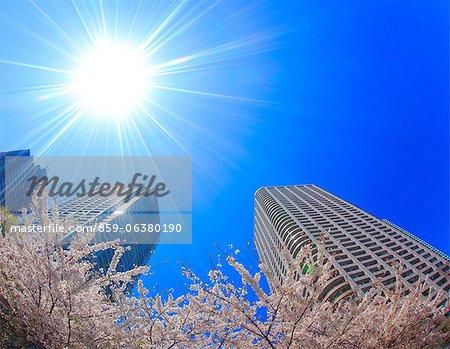 Sakura, Tokyo, Japan