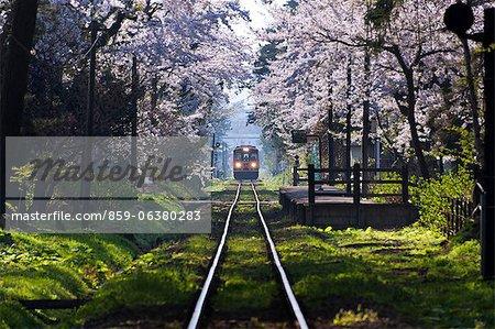 Sakura At Ashinokoen Station, Aomori Prefecture, Japan