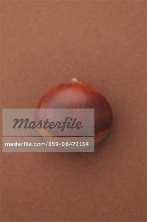 Chestnut on brown background