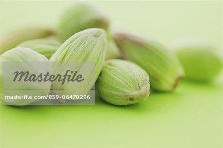 Bog Rhubarbs on green background